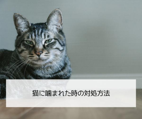猫に噛まれた時の対処